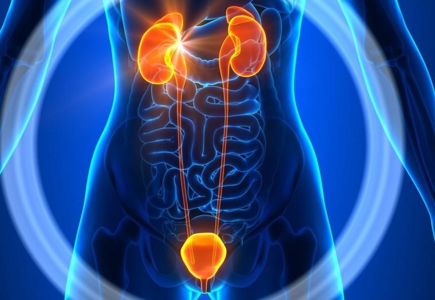сочи - Лечение заболеваний мочеполовой системы